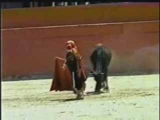 Midget Bullfighter