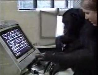 Chimp Gamer